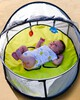 خيمة لعب وسرير متنقل 2 في 1 نيدو ميني من بيبي لوف image number 2
